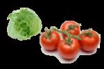 рецепт салата из свежих овощей