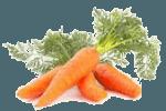 салат с куриной грудкой и морковью